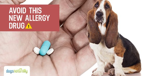 Apoquel Vet Says Beware The Side Effects Dog Allergies Dogs Naturally Magazine Holistic Pet Care
