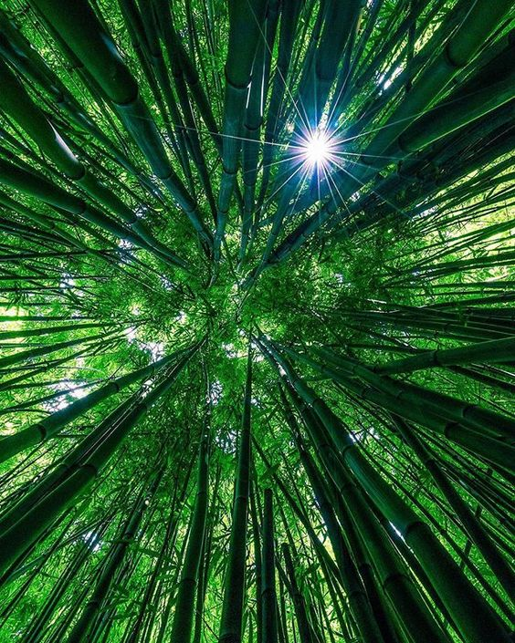 Bamboo forest 🎋 Photo by @theplanetd