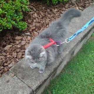 Paracord Pet Harness