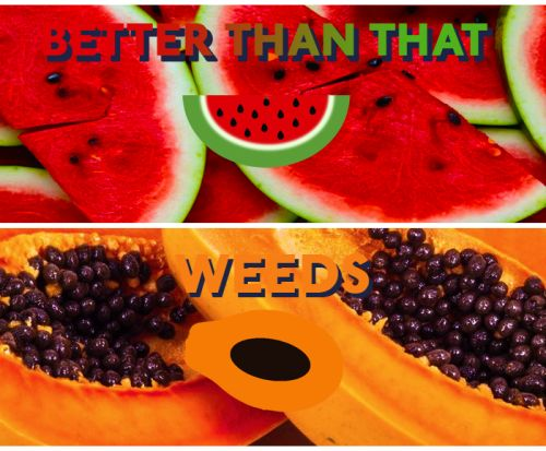 BETTER THAN THAT & WEEDS