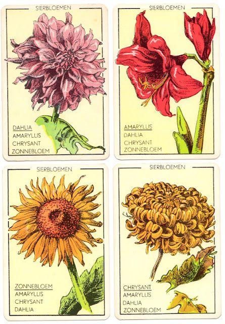 Flower card game