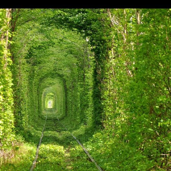 Alice in wonderland-ish. Tree tunnel @ rivne , ukraine