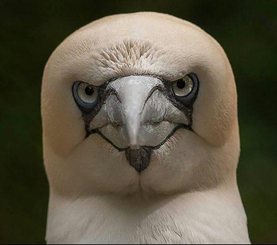 Vogel of eend?