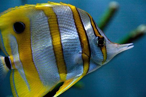 Fish Potraits 8