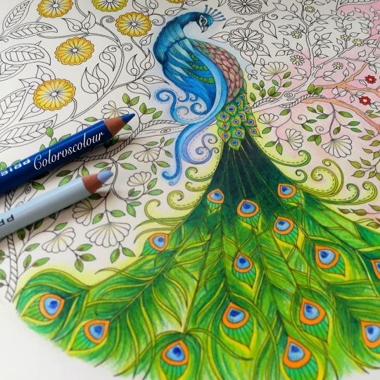 Johanna basford picture by chris cheng colouring for Peacock crafts for adults