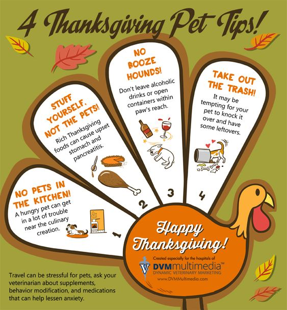 4 Thanksgiving Pet Tips: