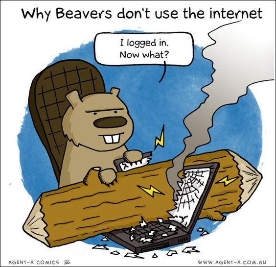 Internet beaver