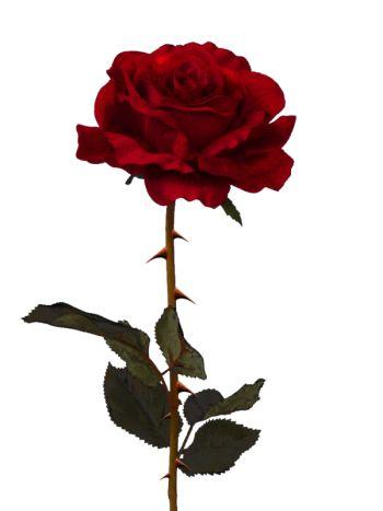 rosas png tumblr - Pesquisa Google