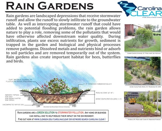Rain garden rain and gardens on pinterest for Rain garden design