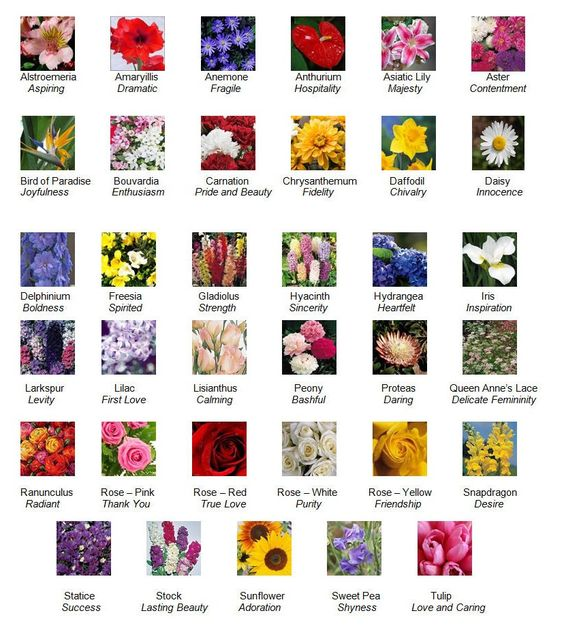 flower descriptions and their meanings in