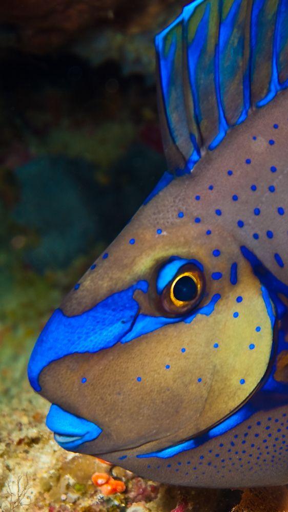 ALS MOTIV AUF DEN GROSSEN RAHMEN  Night dive at Selayar Indonesia - ©Markus Zehnder (grufti57) - www.fotocommunity.de/pc/pc/cat/728/display/27747111