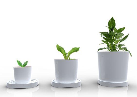 Plant Growing Design Concepts