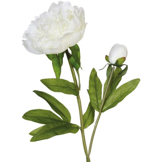 OKA Faux Peony Alba Flower Stem (£7.50) ❤ liked on Polyvore featuring home, home decor, floral decor, flowers, plants, fiori, other, white, white flower bouquet and artificial flower arrangement
