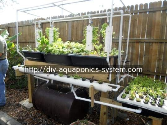 Aquaponics Filter System Aquaponic Vegetable Garden Aquaponics