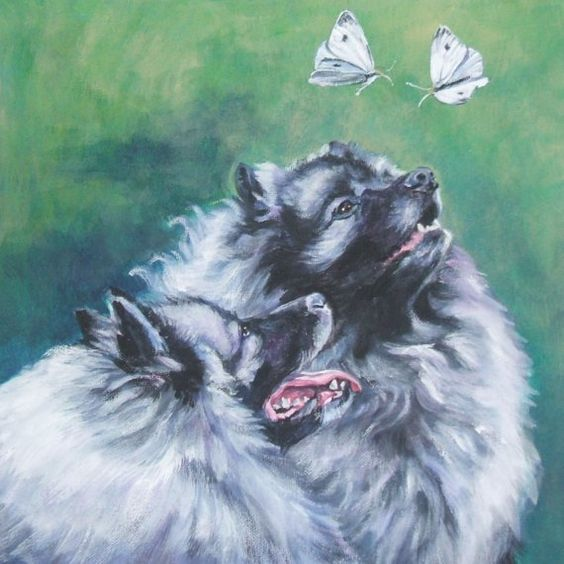 Keeshond dog art CANVAS print of LA Shepard painting 8x8
