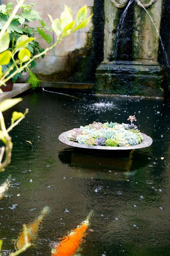 Succulents small ponds and centerpieces on pinterest for Pond fish wanted