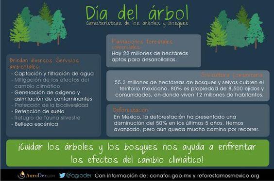 #MEX celebra la #FiestadelBosque con resultados #DiadelArbol #cambioclimatico #infografia