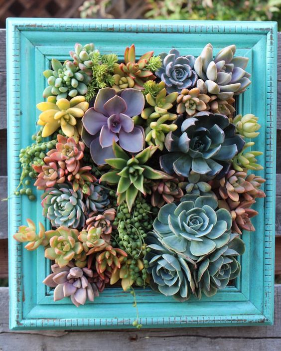 Mother's Day Gift Picture Framed Vertical Succulent Garden Planter Ready to ship!