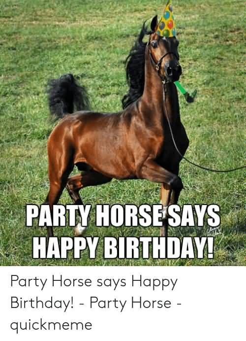 15 Hilarious Happy Birthday Horse Meme Photos Nine Bro Happy Birthday Horse Horse Meme Happy Birthday Funny