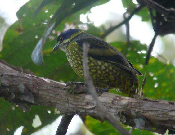 Birdwatching holidays - Birding Tours - ECUADOR
