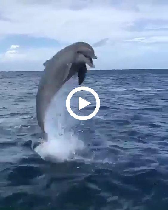 A moda é nadar com golfinhos