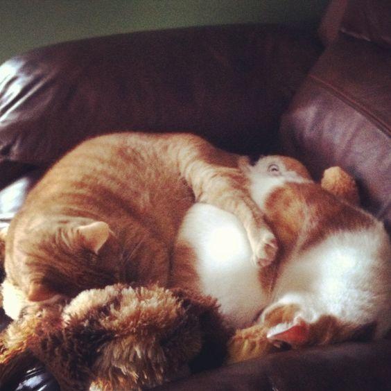 Cuse and Eli snuggin.