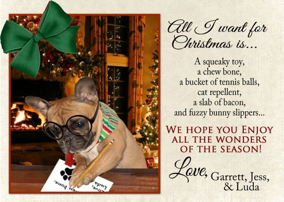 Pretty much the best French Bulldog Christmas card....ever!