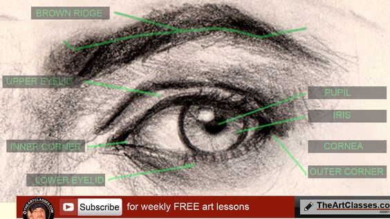 How to draw eye. Drawing eye from front view step by step and video tutorial online lesson. Learn to draw with basic drawing video lesson demonstration. Both of the videos show basic drawing and sketching video series of drawing face,…
