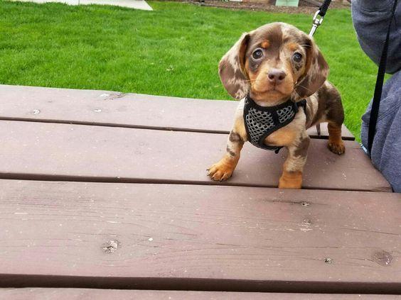 How cute is my dachshund!!?