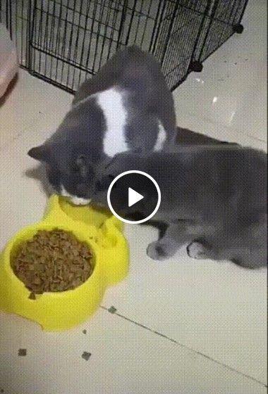 Quando você está comendo e seu irmão termina antes