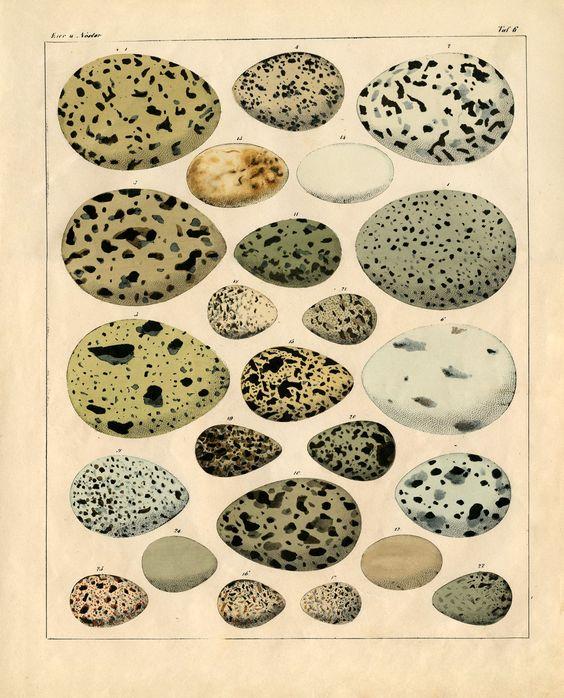*The Graphics Fairy LLC*: Instant Art Printable - Gorgeous Bird Eggs