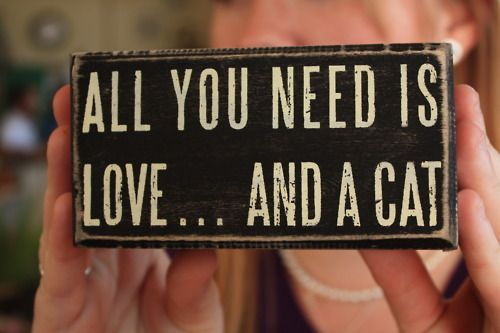 All you need is love... and a cat. Isn't that the truth! #sayings #quote #cat #sign #graphic