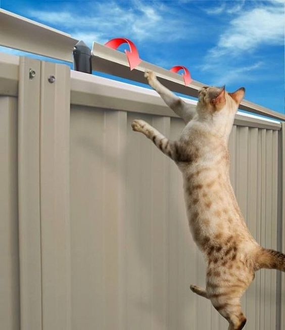 RadioFence.com - PetSafe Indoor Cat Barrier, $129.95 (https://www ...