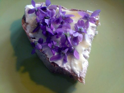 Eating wild violets is good for you