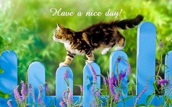 have a nice day: