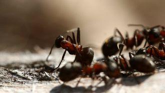 10 trucs efficaces anti fourmis pour les loigner de votre. Black Bedroom Furniture Sets. Home Design Ideas
