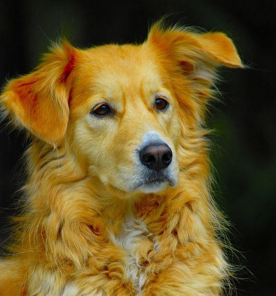 Guard Dog by JandDphotography on @DeviantArt