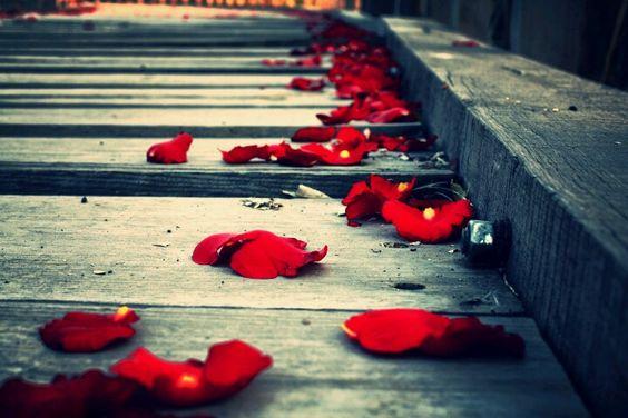 Camino de rosas