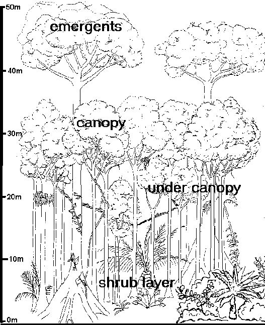 Printables Layers Of The Rainforest Worksheet pinterest the worlds catalog of ideas layers a rainforest