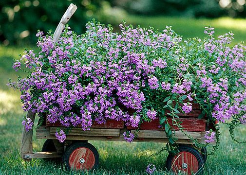 Love the look of the single color/species overflowing the sides of the old wagon -- will do this using multiple pots in our old wagon, thinking it won't rust as quickly as filling it with dirt ~ from bhg.com