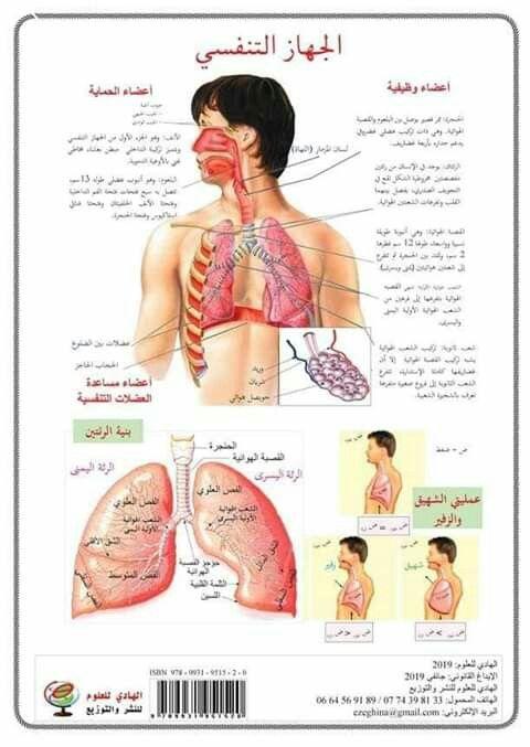 الجهاز التنفسي Teach Arabic Bullet Journal Ideas Pages Teaching English