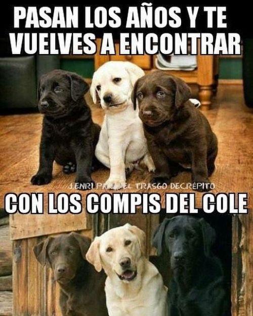 Perros Graciosos Http Enviarpostales Es Perros Graciosos 150 Perros Animales Dog Memes Animal Memes Memes