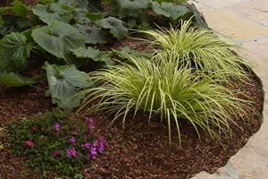 When it comes to Mulch is there really a difference in what can, and in some cases should, be used.  Here we look at the Mulches available and what you could use in your garden.: