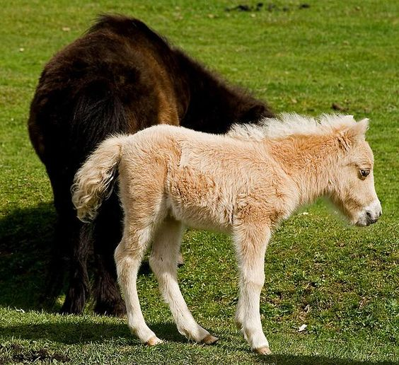 How can you not love a baby horse!