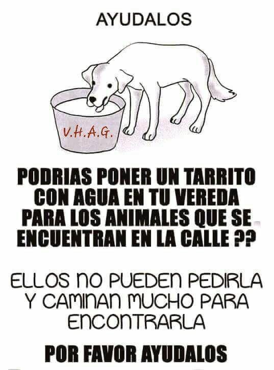 Pin De Sebas 07 El Amo Morita En Animales Historias De Perros Cuidar Animales Mascotas Frases