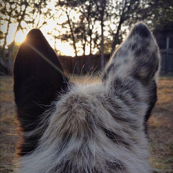 ©Nicole Mlakar / nicolemlakar.com  Ella's ears at sunset (Taken with Instagram)