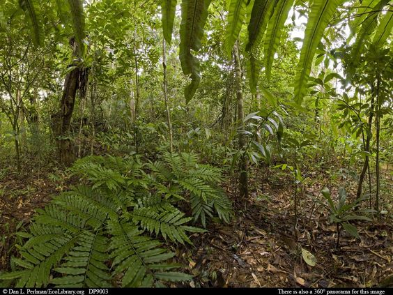 Tropical Rainforest Animals in Africa | Panorama of ...
