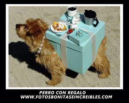 Perro con regalo - http://www.fotosbonitaseincreibles.com/perro-con-regalo/