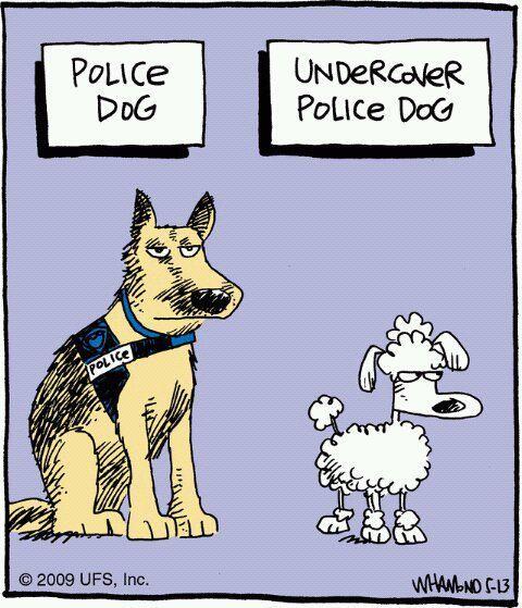undercover police dog cartoon.... - Poodle Forum - Standard Poodle ...: