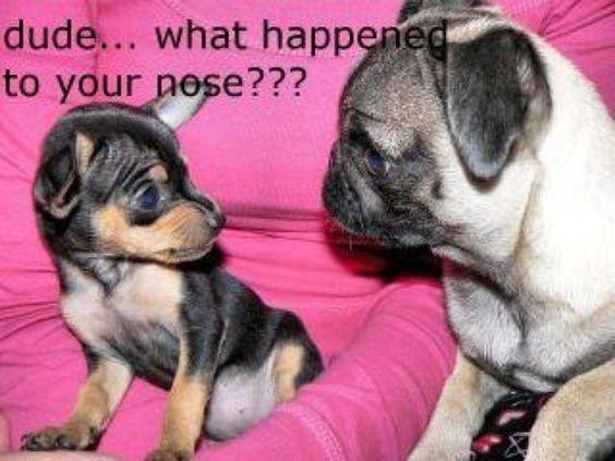 Where's u r nose?